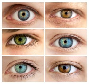 human eye color picture
